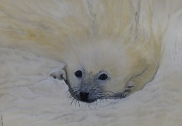 No 5 - Seal cub - Painting